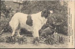 "Kalmthout - Heide-Calmpthout - Schoolvilla ""Diesterweg"" Bella En Tom, De Kindervrienden 1908 Uitg Hoelen Nr 3864 - Kalmthout"