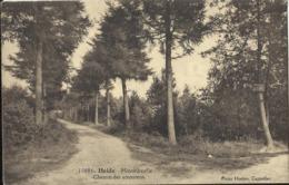 Kalmthout - Heide - Minnedreefje - Chemin Des Amoureux - Utg. Hoelen Nr 10086 - 1928 - Kalmthout