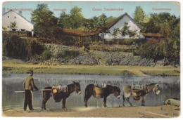 # 10700 Serbia, Nagybecskereki, Zrenjanin Postcard Mailed 1912: Water Pipe, Donkeys - Serbien