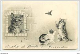 N°2473 - Carte Gaufrée - Chat Essayant D'attraper Un Oiseau - Gatti