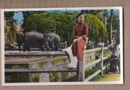 CPSM VIETNAM - SUD VIETNAM - SAIGON - Jardin Botanique - Le Parc Aux éléphants TB PLAN FEMME Assise Devant Animaux - Viêt-Nam