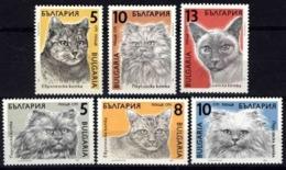 Bulgaria 1989 World Famous Cats Animals Mammals Domestic Animal Cat Fauna Nature Stamps MNH Michel 3808-3813 SC 3510-15 - Domestic Cats