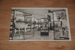 753-       TERVUREN, MUSEUM VAN BELGISCH CONGO - Tervuren