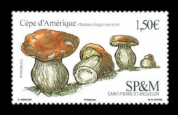 St. Pierre And Miquelon 2019 Mih. 1322 Flora. Mushrooms. American Ceps MNH ** - St.Pierre & Miquelon