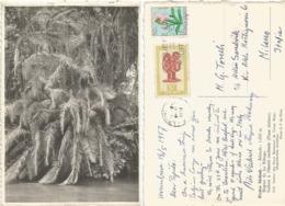 Rwanda Urundi Belgian Colony B/w Pcard Riviere Molindi Lake Kibuga From Usumbura 18may1957 X Italy - Ruanda-Urundi