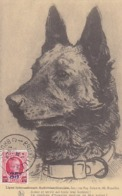 Ligue International Antivivisectionniste - 1929             (A-131-160926) - Dogs