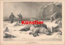 1512 Ludwig Beckmann Eisbären Polarreise Expedition Druck 1879 !! - Estampes