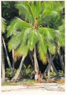 Polynésie Française-Les Tahitiens Deviennent Très Tôt De Remarquables Grimpeurs De Cocotiers (TIKI T44 TAHITI Ph.ASPEN@ - Polynésie Française