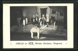 AK Skegness, Circus On Ice, Winter Gardens, Schlittschuh-Zirkus - Figure Skating