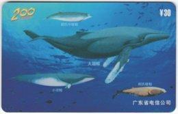 CHINA E-116 Prepaid ChinaTelecom - Painting, Animal, Sea Life, Whale - Used - China