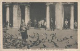 VICENZA-I COLOMBI DAVANTI LA BASILICA - Vicenza
