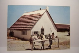 LA CAMARGUE PITTORESQUE   -   Cabane Et Gardian  - Cheval - ( Pas De Reflet Sur L'original ) - Frankreich