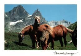 CPM - CHEVAUX En Montagne - Photo Bernard GRANGE ... - Chevaux