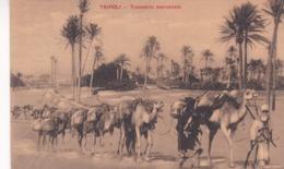 TRIPOLI - TRASPORTO MERCANZIE. POSTALE CPA CIRCA 1930's NON CIRCULEE -LILHU - Libia