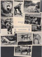 Zoo - Tervuren - Zoologie - 10 Snaps. - Tervuren