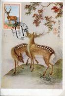 49090 Russia, Maximum 1959, Cervus Axix. Deer  Cerf  Hirsch - Game