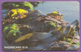 Telecarte °_ Afrique Du Sud- R10-Algues Marines- R/V 7358 ° TBE - Südafrika