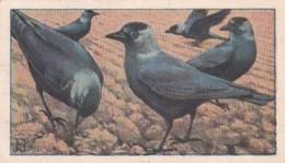 1937146Afdeeling Albums, Verkade's Fabrieken N.V. Zaandam No, 90 Kauwtjes Op Omgeploegd Land - Reclame