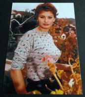 SOPHIA LOREN # Sexy Portrait # Großes Star-Photo, Ca. 13 X 18 Cm # [19-4561] - Fotos