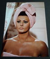 SOPHIA LOREN # Sexy Pin-Up Portrait # Großes Star-Photo, Ca. 13 X 18 Cm # [19-4555] - Fotos