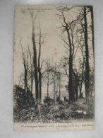 JUVISY SUR ORGE - Sous Bois Dans Le Parc - Effet D'hiver - Juvisy-sur-Orge