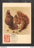 ANDORRE - ANDORRA - Carte MAXIMUM 1954 - Albrecht Dürer - Écureuil - Non Classificati