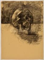Perlrott Jelzéssel: Koponya. Szén, Papír, 59×43 Cm - Non Classificati