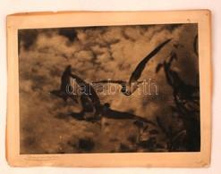 Olvashatatlan Jelzéssel: Madarak. Ofszet, Papír, Sérült, 26×36 Cm - Non Classificati