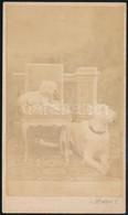 Cca 1864 Pest, A Kép Felirata Szerint Gróf Nyáry Izidor Két Kutyája, A Vizitkártya Méretű, Vintage Fotót Készítette Pfle - Altre Collezioni