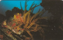 Venezuela, CAN2-0176, Marine Fauna, Lirio De Mar Anaranjado (1/10), 2 Scans. - Venezuela