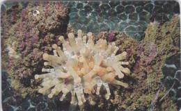 Venezuela, CAN2-0193b, Anémona Punta Gruesa (6/10), 2 Scans.   GEM1A (Symmetric Black) - Venezuela