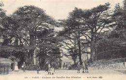 France 75 Paris  Cèdres Du Jardin Des Plantes  Zoo Zoologique   Barry 2 - Champs-Elysées