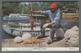 V9503 BERMUDA LOBSTER FISHERMAN FISH ARAGOSTA LOBSTER VG FP Taglietto (m) - Bermudes
