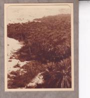 TUNISIE Corbeille De NEFTA 1923  Photo Amateur Format Environ 5 X 3,5 Cm - Luoghi