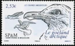 SAINT PIERRE AND MIQUELON SPM 2006 Iceland Gull Bird Birds Animals Fauna MNH - Möwen