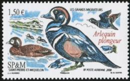 SAINT PIERRE AND MIQUELON SPM 2008 Harlequin Duck Ducks Bird Birds Animals Fauna MNH - Entenvögel