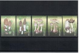 Belarus 1998 . Mushrooms. 5v: 2500,3800,4600,5800,9400.  Michel # 280-84 - Belarus