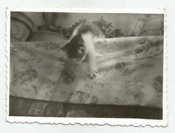 Little Kitty  F901-265 - Altri