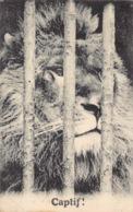France 75 Paris Jardin Des Plantes Zoo Zoologique Lion Captif !      Barry 118 - Parcs, Jardins