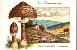 CHICOREE WILLIOT LES CHAMPIGNONS LEPIOTE ELEVEE - Thé & Café