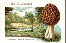 CHICOREE WILLIOT LES CHAMPIGNONS MORILLE RONDE - Thé & Café