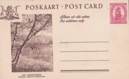 AFRIQUE DU SUD :  Entier Postal Neuf 1 Penny Rouge . Bateau 1926 - South Africa (...-1961)
