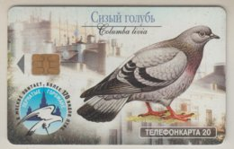 RUSSIA 2003 DOVE COLUMBA LIVIA APUS APUS SWIFT - Otros