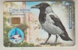 RUSSIA 2003 CROW CORVUS CORNIX MONEDULA JACKDOW - Otros