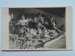 Romania 603 Deutsche Heimatbilder Banat 1930 Photo Arta Timisoara Temeswar Gross Jetscha Iecea Mare Besenova Dudestii N. - Roumanie