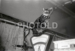 1966 CHAT CAT GATO TALHO BUTCHER SCHLACHTER PORTUGAL AMATEUR 35mm ORIGINAL NEGATIVE Not PHOTO No FOTO - Photographica