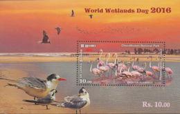 Sri Lanka 2016. Flamant Rose.Greater Flamingo - Flamants