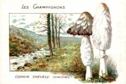 CHICOREE WILLOT LES CHAMPIGNONS COPRIN CHEVELU - Thé & Café