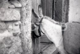 1973 DONKEY BURRO  PORTUGAL AMATEUR 35mm ORIGINAL NEGATIVE Not PHOTO No FOTO - Photographica