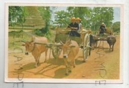 Chariots à Vaches Et à Buffles. - Thaïlande